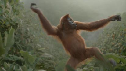 Rynkeby – Orangutan Dance